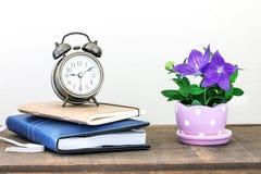 Flor flor de balão ou do grandiflorus roxo de Platycodon em bonito Foto de Stock