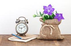 Flor flor de balão ou do grandiflorus roxo de Platycodon no burla Fotos de Stock