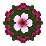 Flor floral da cereja do rosa da roseta Fotos de Stock