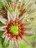 Flor florecida imagen de archivo