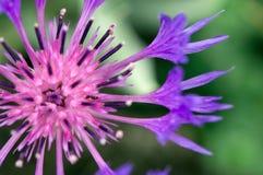 Flor floreciente Imagenes de archivo