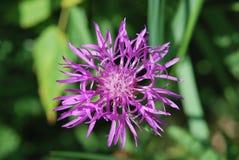 Flor floreciente Fotos de archivo