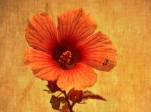 Flor floreciente con el pequeño ladybug rojo Fotografía de archivo libre de regalías
