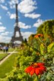 Flor floreciente con la abeja en torre Eiffel en el fondo Imágenes de archivo libres de regalías