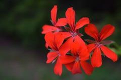 Flor floreciente en el jardín Imagenes de archivo