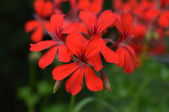 Flor floreciente en el jardín Foto de archivo