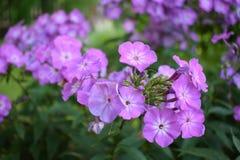 Flor floreciente en el jardín Fotografía de archivo libre de regalías