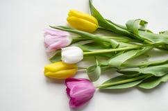 Flor floreciente hermosa del tulipán Fondo del diseño floral?, contexto, diseño de la ilustración Fondo de la naturaleza Fondo de Fotos de archivo libres de regalías