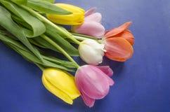Flor floreciente hermosa del tulipán Fondo del diseño floral?, contexto, diseño de la ilustración Fondo de la naturaleza Fondo de Fotos de archivo