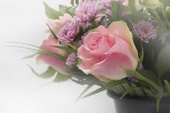 Flor - flores cor-de-rosa Fotos de Stock