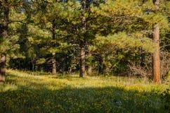 Flor Forest Field Imagen de archivo libre de regalías
