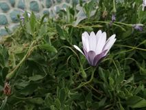 Flor fría imagenes de archivo