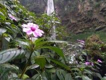 Flor fresca Imagens de Stock Royalty Free