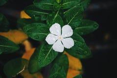 Flor fresca na manhã Fotos de Stock Royalty Free