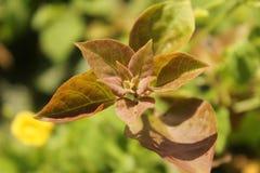 Flor frondosa del brote de la hoja Fotos de archivo