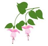 Flor fucsia stock de ilustración