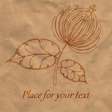 Flor gráfica en el papel Foto de archivo libre de regalías