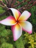 A flor graden dentro no recurso Fotos de Stock