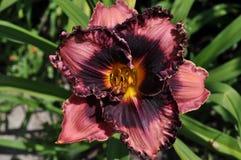 flor grande - flor de Aves fotografía de archivo libre de regalías