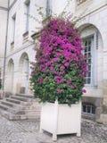 Flor grande delante del museo fotos de archivo