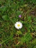 Flor grande e pequena fotografia de stock royalty free