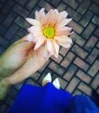 flor handheld imagem de stock royalty free