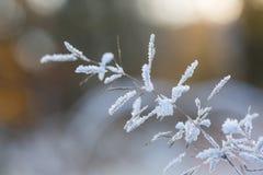 Flor helada Fotografía de archivo libre de regalías