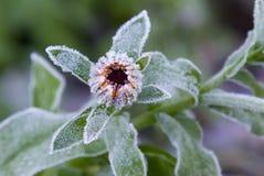 Flor helada estacional Fotografía de archivo libre de regalías