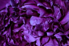 Flor hermosa imagen de archivo