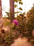 Flor hermosa Foto de archivo libre de regalías