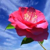 Flor hermosa Fotos de archivo libres de regalías
