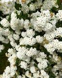 Flor hermosa imagen de archivo libre de regalías