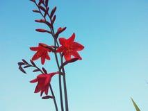 Flor hermosa Foto de archivo