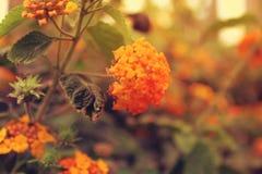 Flor hermosa anaranjada en el jardín de Dubai, UAE el 21 de febrero de 2017 Foto de archivo libre de regalías