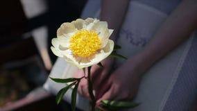 Flor hermosa apacible en manos de la hembra almacen de metraje de vídeo