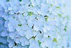 Flor hermosa blanca Stylization de la acuarela imagen de archivo libre de regalías