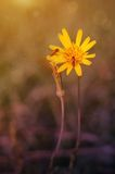 Flor hermosa con la abeja en puesta del sol Imagenes de archivo
