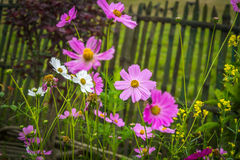 Flor hermosa de la estación de primavera Fotografía de archivo