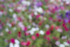 Flor hermosa de la imagen de falta de definición imagen de archivo