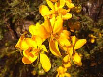 Flor hermosa de la India Imagenes de archivo