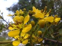 Flor hermosa de la India Imágenes de archivo libres de regalías