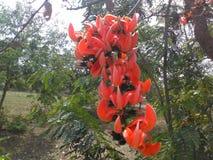 Flor hermosa de la India Imagen de archivo libre de regalías