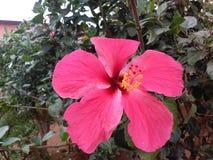 Flor hermosa de la India Fotos de archivo