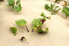 Flor hermosa de la lila en un arena de mar Imagen de archivo libre de regalías