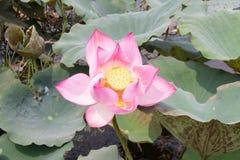 flor hermosa de la naturaleza imágenes de archivo libres de regalías