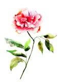Flor hermosa de la peonía Imagen de archivo