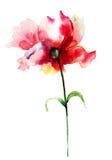 Flor hermosa de la peonía Fotografía de archivo