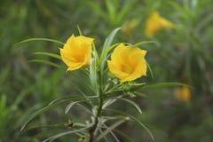 Flor hermosa del color amarillo en la naturaleza Fotografía de archivo