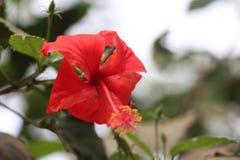 Flor hermosa del color rojo en la naturaleza Foto de archivo libre de regalías