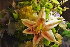 Flor hermosa del día Imagen de archivo